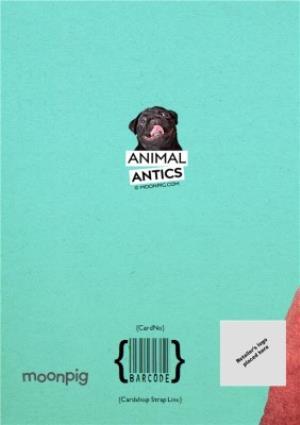 Greeting Cards - Birthday Card - Photo Humour - Animal Antics - Hair Of The Dog - Image 4