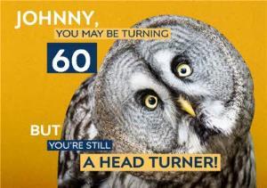 Greeting Cards - Birthday Card - Photo Humour - Animal Antics - 60th Birthday - Image 1
