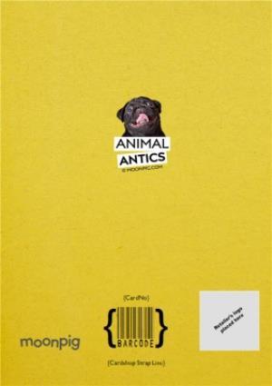 Greeting Cards - Birthday Card - Photo Humour - Animal Antics - Birthday Gifts - Image 4