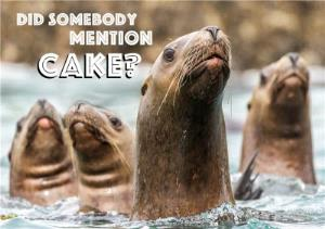 Greeting Cards - Bunch Of Seals Did Someone Mention Cake Card - Image 1