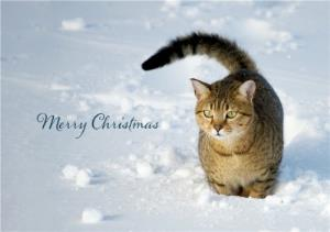 Greeting Cards - Christmas Card - Merry Christmas - Snow - Cat - Image 1
