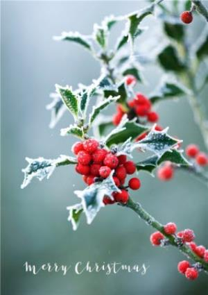 Greeting Cards - Christmas Card - Merry Christmas - Snow - Holly - Winter Berries - Image 1