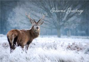 Greeting Cards - Christmas Card - Season's Greetings - Snow - Deer - Image 1