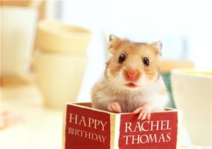 Greeting Cards - Hamster Inside A Book Personalised Birthday Card - Image 1