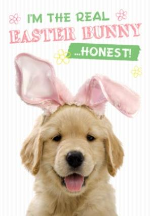Greeting Cards - Adorable Puppy I Am The Real Easter Bunny Card - Image 1