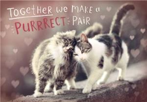 Greeting Cards - Cute Cuddling Cats We Make A Purrrrect Pair Valentine's Day Card - Image 1